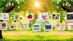 Photo Gallery on a Sunny Afternoon Prezi Presentation Template
